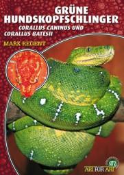 Grüner Hundskopfschlinger - Corallus caninus