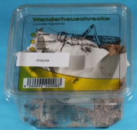 Wanderheuschrecke micro, Dose