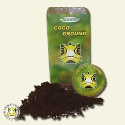 Coco - Ground