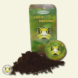 Mini - Coco - Ground