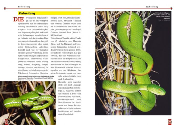 Die Weisslippen Bambusotter Trimerusurus Albolabris Schlangen