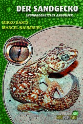 Der Sandgecko - Chondrodactylus angulifer