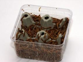 Mehlwürmer 50 g, Dose