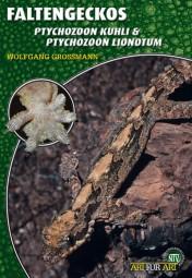 Faltengecko - Ptychozoon kuhli