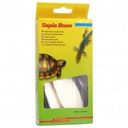 Lucky Reptile Sepia Bone