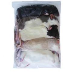 Ratten groß ca. 100 - 120 g